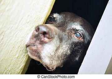 cane, cattività