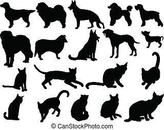 cane, collezione, gatto