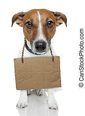 cane, con, vuoto, cartone