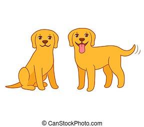 cane da riporto, cane, giallo, labrador