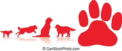 cane, fondo, zampa