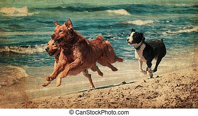 cane, gioco