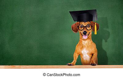 cane, il portare, consiglio mortaio, su, verde, asse, fondo