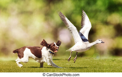 cane, inseguire, uccello, in, campo