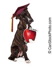 cane, obbedienza, scuola, laureato