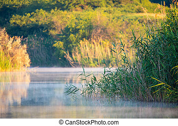 Cane or Reed in lake with mist in the morning