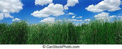 cane over cloudy sky