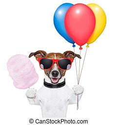 cane, palloni, e, zucchero filato