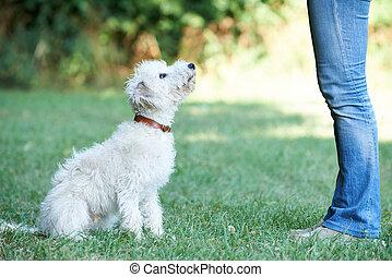 cane, proprietario, insegnamento, coccolare, lurcher, sedere