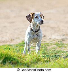 cane, randagio