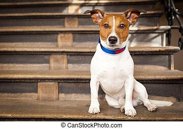 cane, solo, sinistra