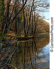 Cane thicket on lake Montorfano (North Italy) - Cane thicket...