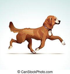 cane, vettore, cane da riporto, labrador