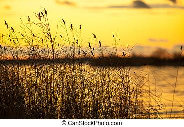 autumn golden sunset