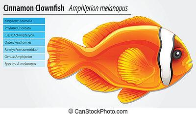 canela, clownfish