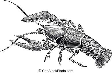 cangrejos de río, grabado, alto, detalle