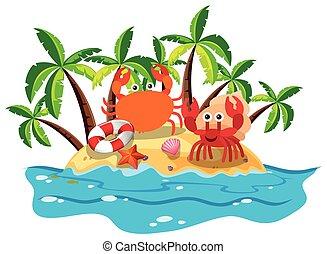 cangrejos, isla, vivo