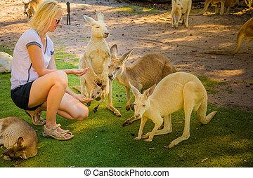 canguru, com, joey