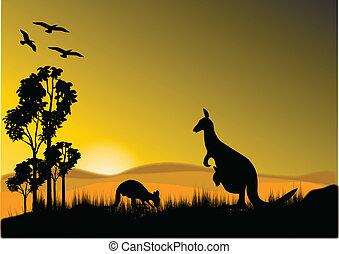 canguru, pôr do sol, horizion