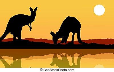 canguru, silueta, lago, paisagem