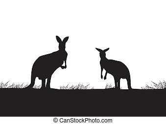 canguru, silueta