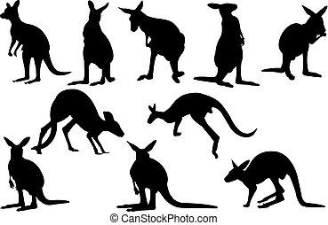 canguru, vetorial, silueta, Ilustração