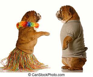 cani, due, ballo