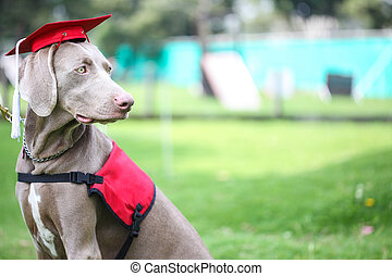 Canine graduation