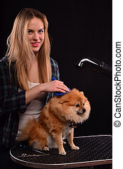 Young canine hairdresser girl styling fluffy fur of Pomeranian dog