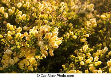 canisse, arbre, fleur