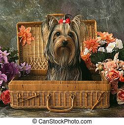 canisse, cas, chien