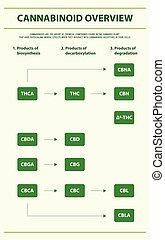 cannabinoid, áttekintés, függőleges, infographic