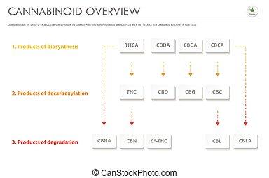 cannabinoid, 概観, ビジネス, infographic, 横