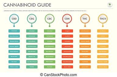 cannabinoid, 横, ビジネス, infographic, ガイド