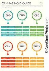 cannabinoid, 縦, ビジネス, infographic, ガイド