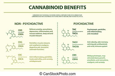 Cannabinoid Benefits horizontal infographic