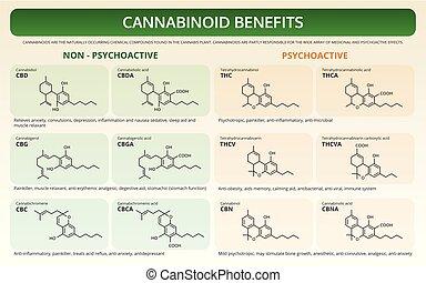 Cannabinoid Benefits horizontal textbook infographic