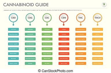 Cannabinoid Guide horizontal business infographic