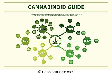 Cannabinoid Guide horizontal infographic illustration about ...