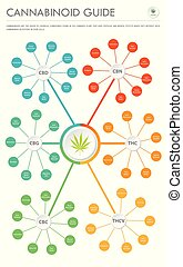 Cannabinoid Guide vertical business infographic illustration...