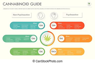 cannabinoid, horisontal, affär, infographic, guide