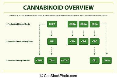 cannabinoid, infographic, áttekintés, horizontális, befejez