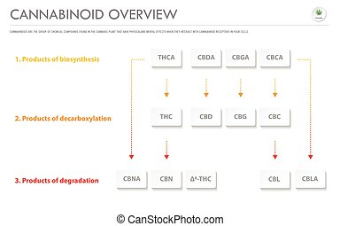 cannabinoid, présentation, business, infographic, horizontal