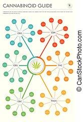 cannabinoid, verticaal, zakelijk, infographic, gids