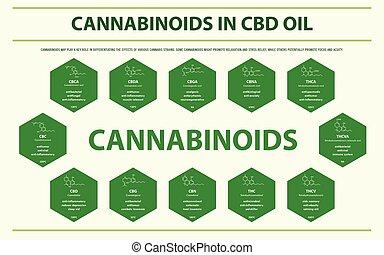 cannabinoids, フォーミュラ, オイル, infographic, 横, cbd, 構造