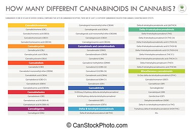cannabinoids, cannabis, business, infographic, différent, horizontal, beaucoup, comment