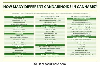cannabinoids, cannabis, infographic, olik, horisontal, många, hur