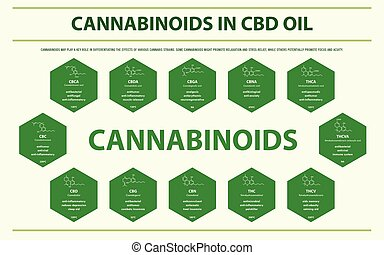 Cannabinoids in CBD Oil with Structural Formulas horizontal infographic