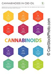 Cannabinoids in CBD Oil with Structural Formulas vertical business infographic