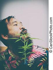 cannabis植物, 愉快, 人